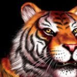 Get 50 Free Spins In King Tiger At Miami Club Casino